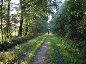 Wandelen in Drenthe