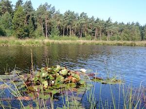 varen rust Drenthe water