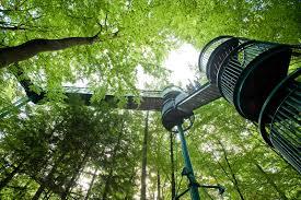 Boomkroonpad. Wandelen in de bomen