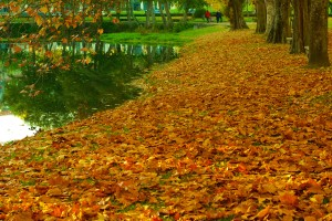 Herfst in Drenthe, boek je bungalow nu